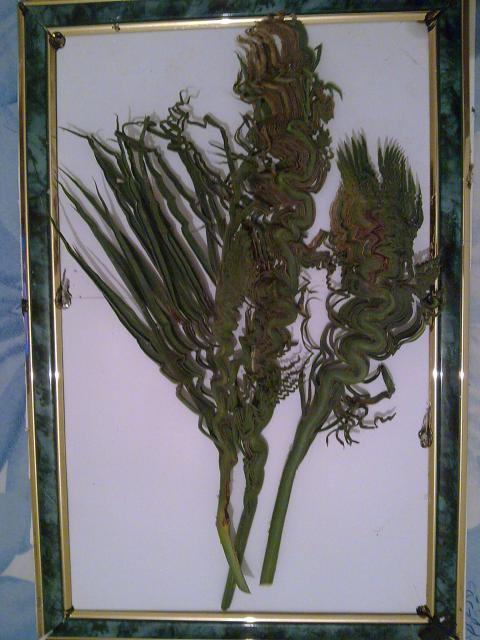 Compositions florales Marcelhorti 2010/2011 672619Photo018