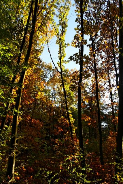 Les couleurs de l'automne 675140IMG_7627_DxO__640x480_