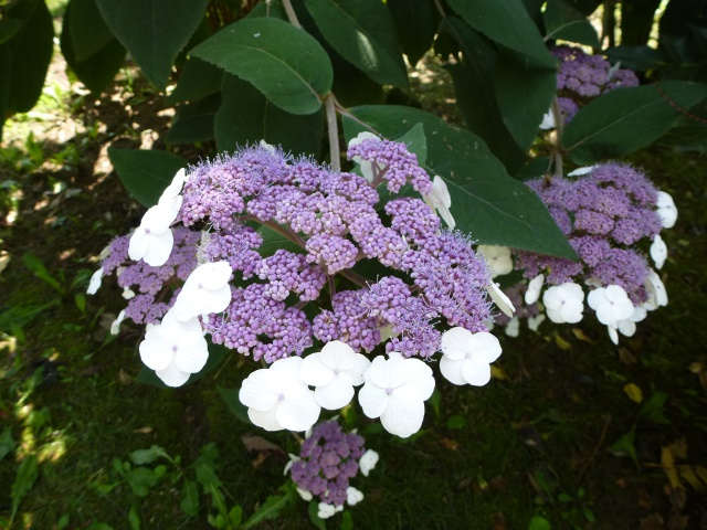 (26) Jardin Zen d'Erik Borja - Beaumont Monteux 676357P1020195