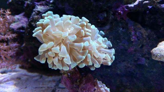 Mon premier aquarium eau de mer - Page 3 67927220141201144449