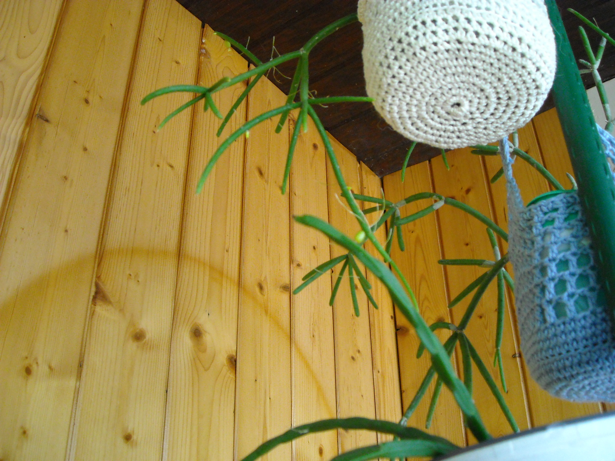 un aperçue de mes autres plantes 681359plantegrasse002