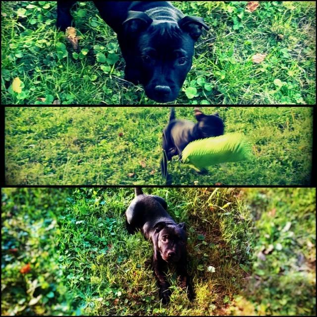 Kami, chien de randonnée - Page 18 681475V8BF0