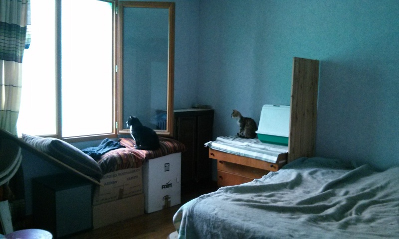 DUCHESSE - chatte femelle, née 2011/2012, borgne - (PASCANI) - adoptée par Chantal Pascal (dpt 63) - Page 3 6845134839