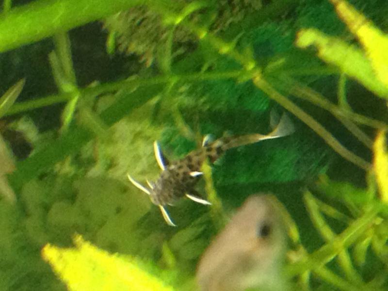 Identification d'un poisson 686924IMG1383