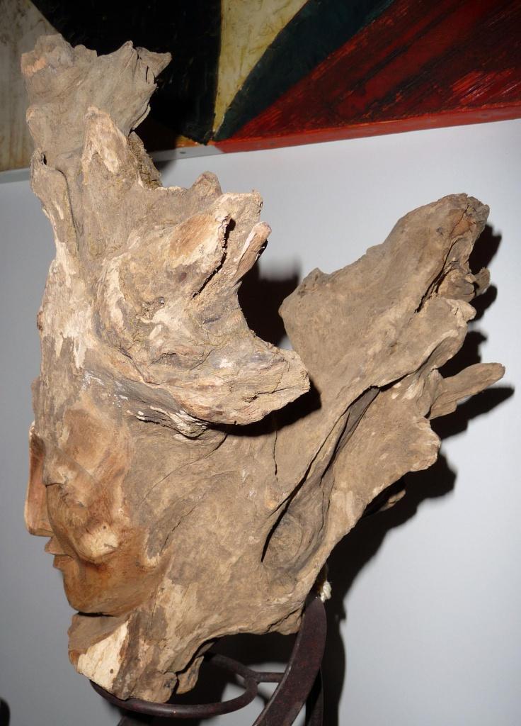 Aide traitement racine arbre 'platane) 691999P1080696