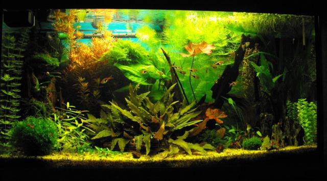 mes aquariums 692274DSCF6173