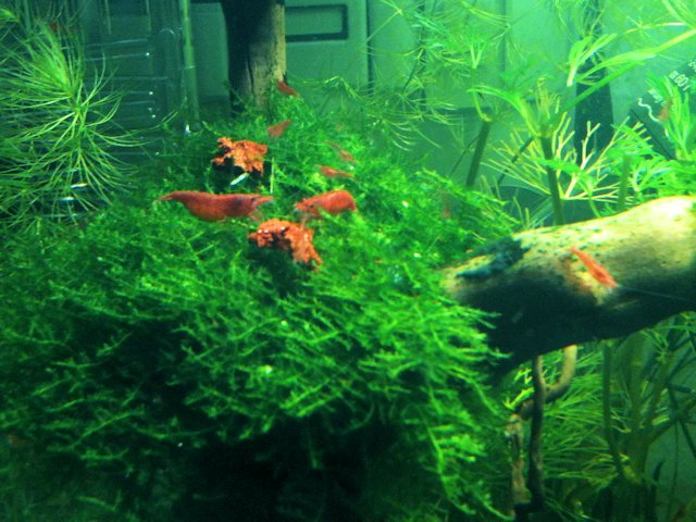 Mon Scaper's Tank 50L Aquascaping - Page 2 693393IMG0553