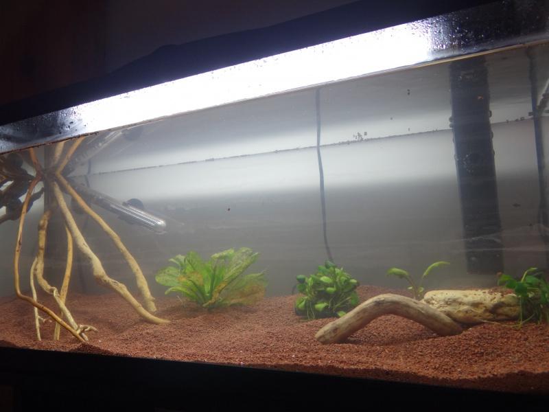 Ma Fish'étagère et les autres  700652aquariumeneau3