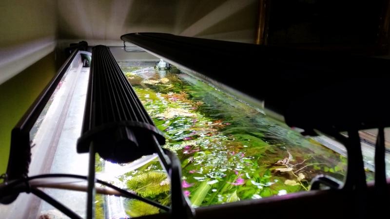 Mes (plus) de 60 plantes dans mon 240 litres - Page 6 70333120141221082818