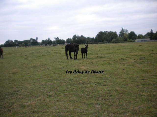 (Dept71) UFINETTE DE COURRET (DCD), BRUME et ANAIS sauvées par la ferme Renaissance (2011) - Page 3 703535CHEVAUX020611015