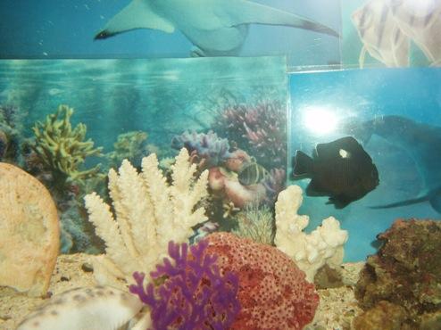 agressivité des poissons 704147PB300011