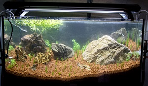 trigon 190 + cuve 120x30x40 aquascaping - Page 3 705409Copyoflancement