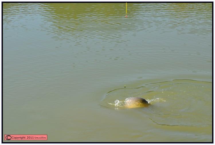 Vendredi jour du poisson 705456action4