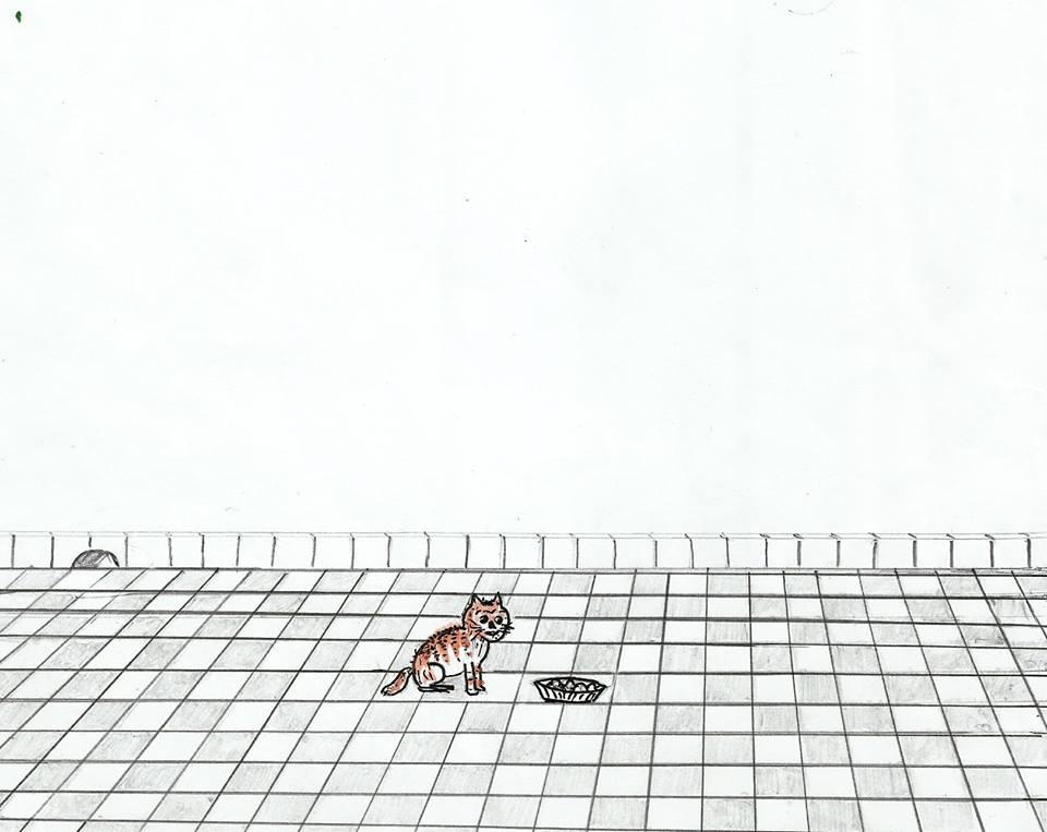 القط والفأر / محمد إبراهيم بوعلو 70956270f9