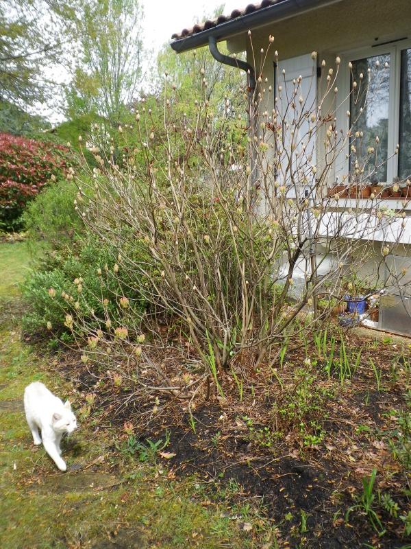 avril, jardin fébrile - Page 4 710401IMGP4056