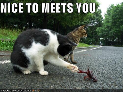 Petite présentation  716708lolcatscatshakes