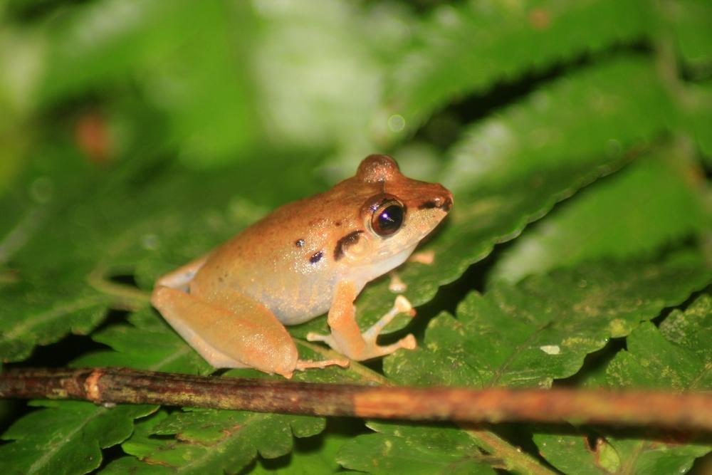 15 jours dans la jungle du Costa Rica - Page 2 716742crassi1r