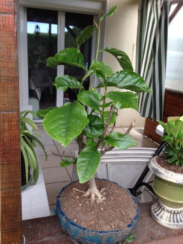 mes bonsaïs - Page 7 720042IMG5625
