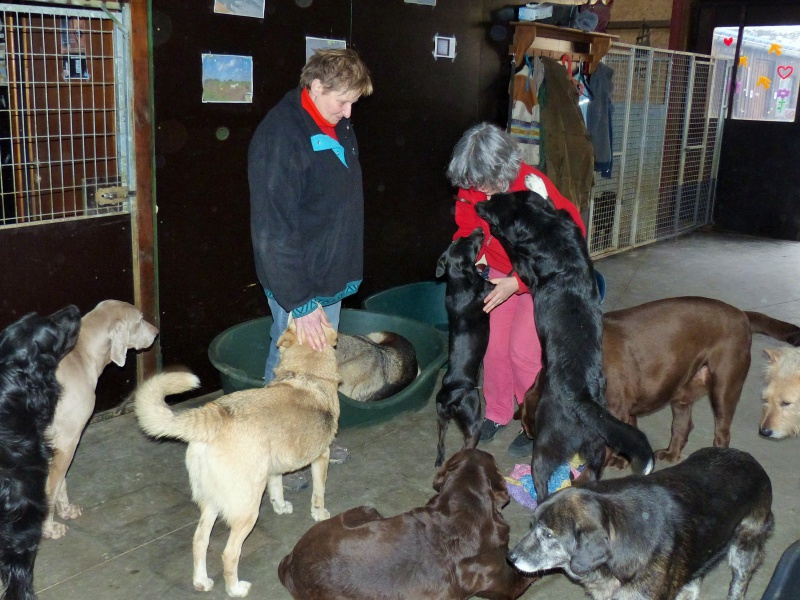 Pongo, chien des rues, né en 2009, très affectueux !! 720862P1080420