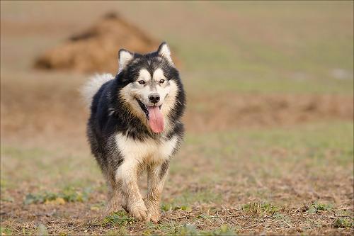 quand les gens confonde vos chiens avec une autre race!!! - Page 16 72292512079821846f51bdfaf9a