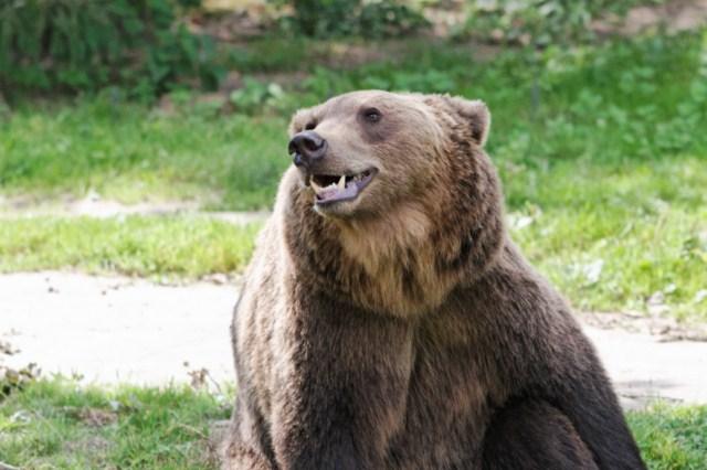 Zoo du Pal (Allier: Dompierre sur Besbre) 723968IMG_6264_DxO__640x480_
