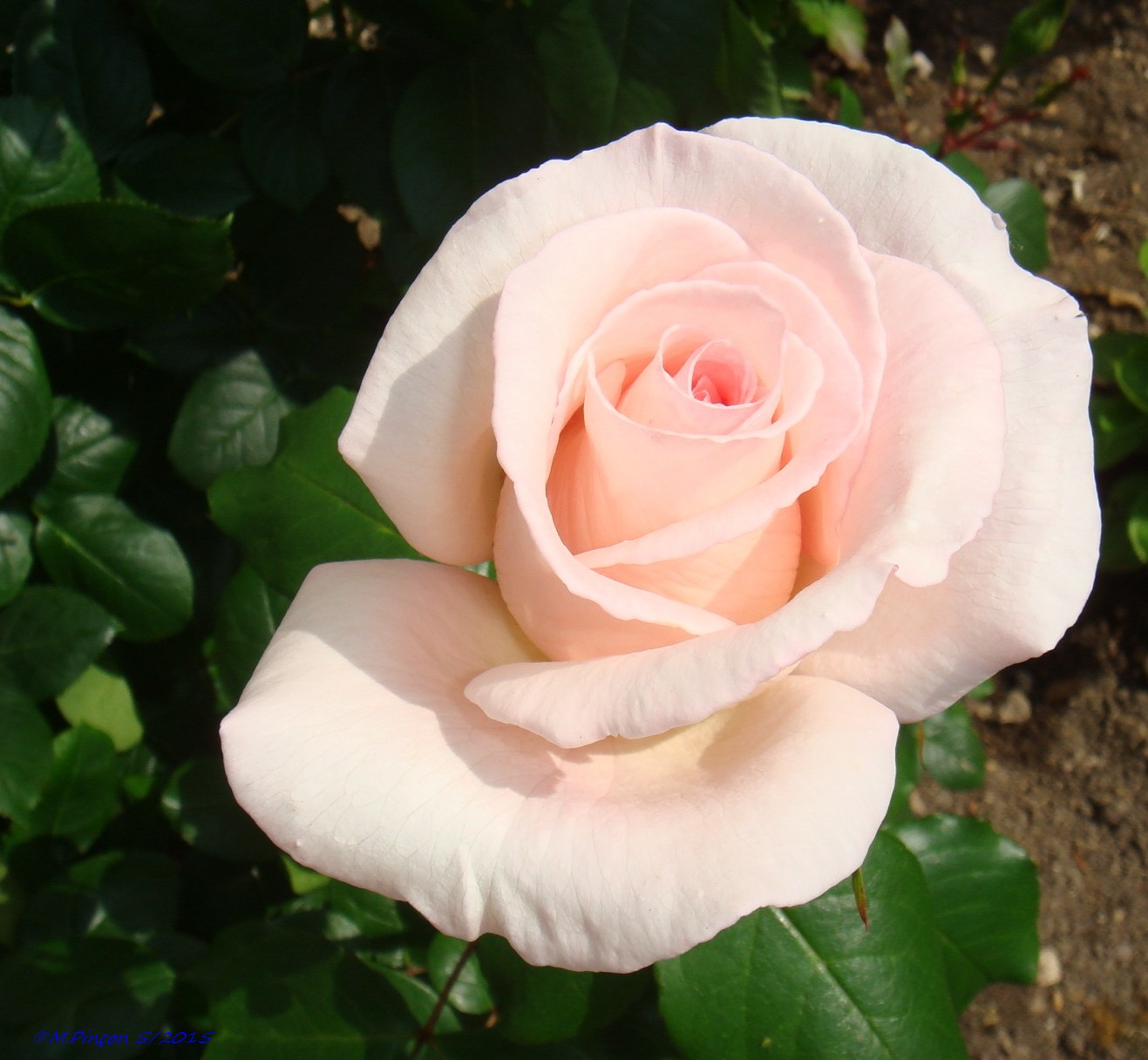 [Fil Ouvert] Fleurs 725166DSC08107