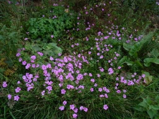 les plantes que je propose 727889fleurs_de_printemps_387_modifier