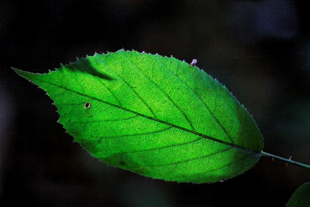 Les couleurs de l'automne 730312IMG_7608_DxO__640x480_