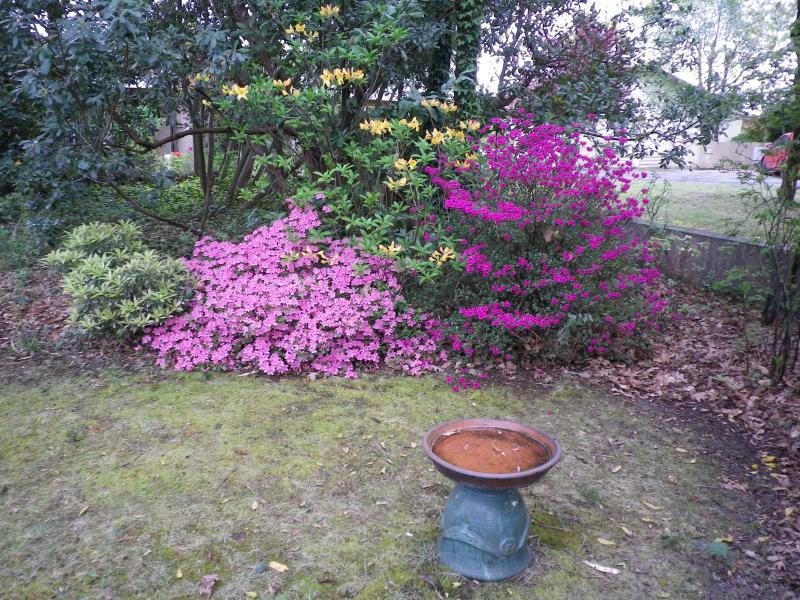 Quelques floraisons 731474IMGP1430