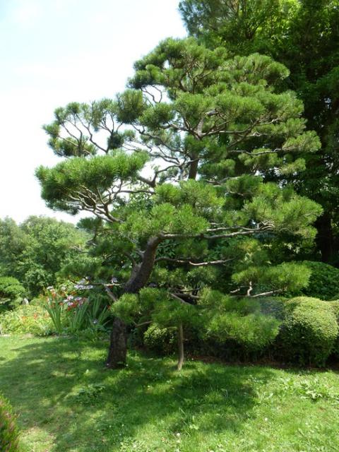 (26) Jardin Zen d'Erik Borja - Beaumont Monteux 737779tuxpicom1374167179