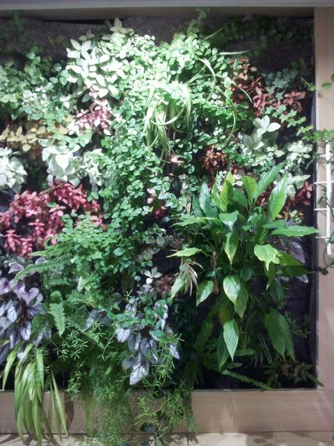 Le nouveau mur végétal de Olivetzou (projet fini à 98%) enfin les leds - Page 3 74452520130823144055