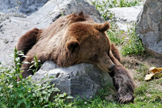 Zoo du Pal (Allier: Dompierre sur Besbre) 744625IMG_6296_DxO__640x480_