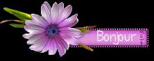 Chez Violine - Forum de Loisirs et Créations Graphiques - Page 11 748016CreachouBlinkie