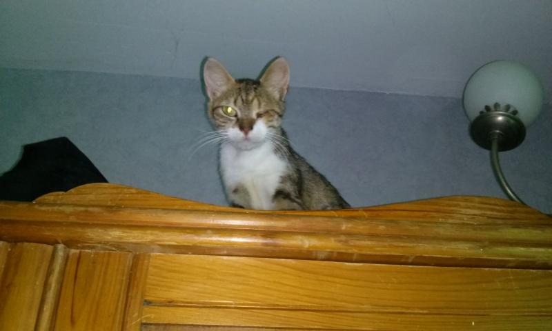 DUCHESSE - chatte femelle, née 2011/2012, borgne - (PASCANI) - adoptée par Chantal Pascal (dpt 63) - Page 3 7492181936