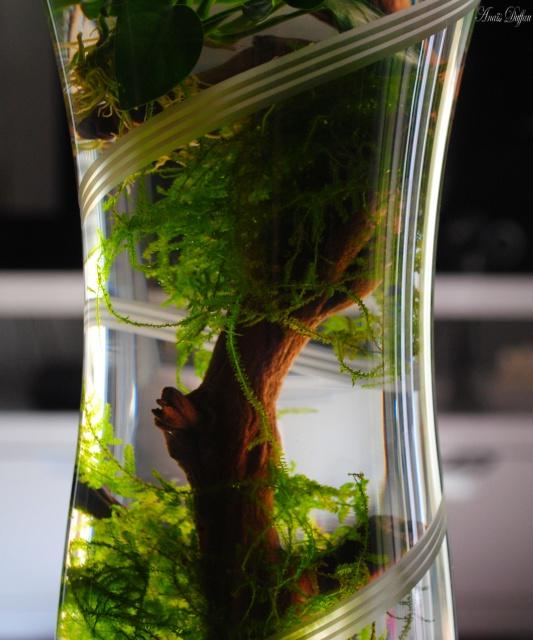 Tous mes poissons + crevettes - Page 5 7525872403