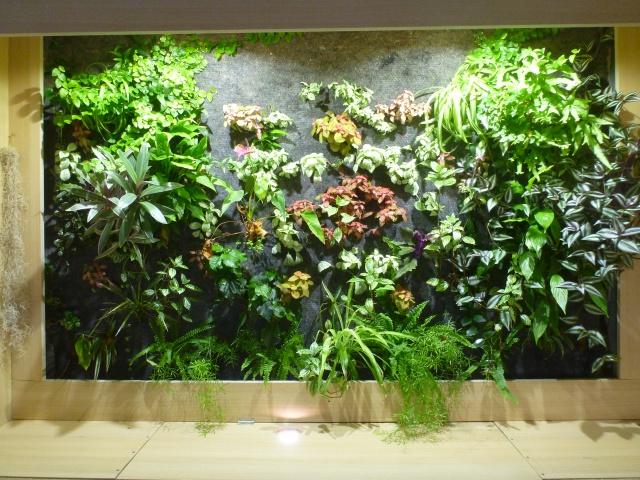 Le nouveau mur végétal de Olivetzou (projet fini à 98%) enfin les leds - Page 4 752627P1010791