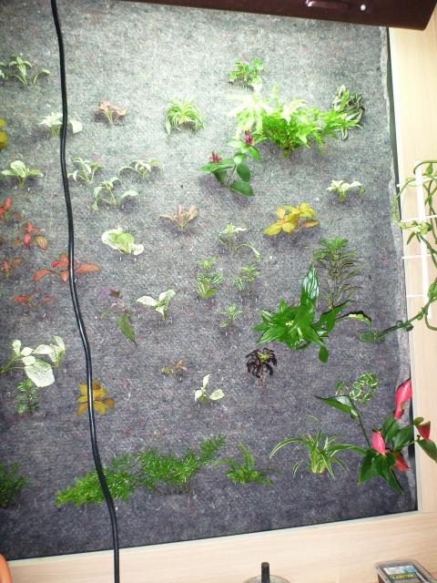 Le nouveau mur végétal de Olivetzou (projet fini à 98%) enfin les leds - Page 2 761509P1010093