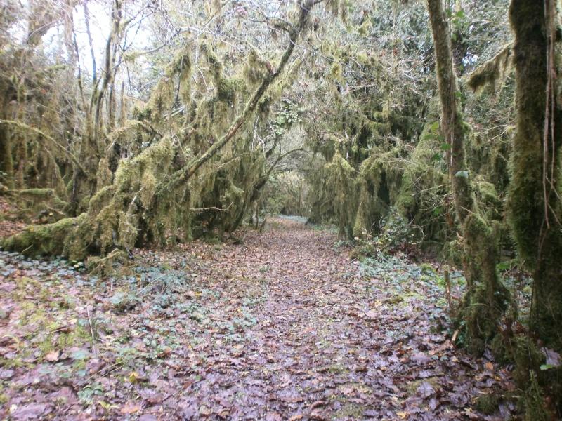 Promenade dans les bois 766063PA270004