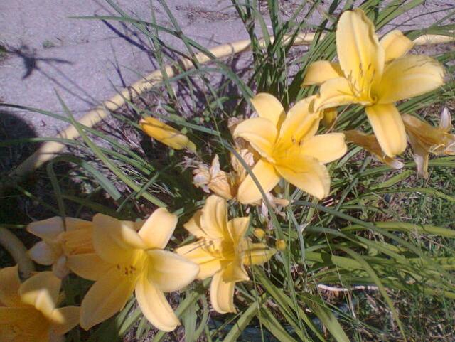 Fleurs  768621power