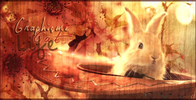 [Design] Graphisme Cat Life 779741magicalhatbyaoao2d4vnh63