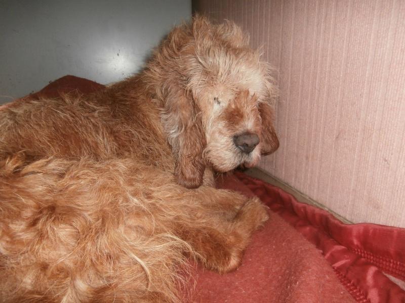 PIPO (chien croisé griffon) 782165PB081703