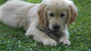 Avant de choisir son premier chien - Page 5 783621DSCN1105