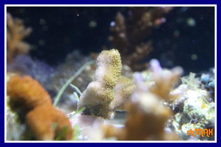 ce que j'amène en coraux a orchie  784524PXRIMG0041GF