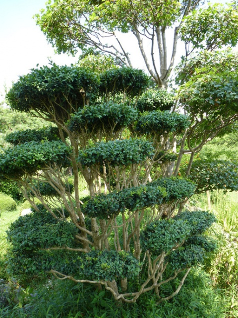 (26) Jardin Zen d'Erik Borja - Beaumont Monteux 789449tuxpicom1374167068
