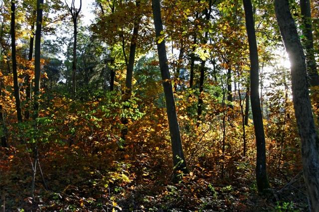 Les couleurs de l'automne 791702IMG_7625_DxO__640x480_