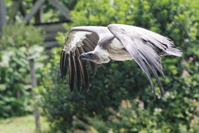 Zoo du Pal (Allier: Dompierre sur Besbre) 791997IMG_6189_DxO__640x480_