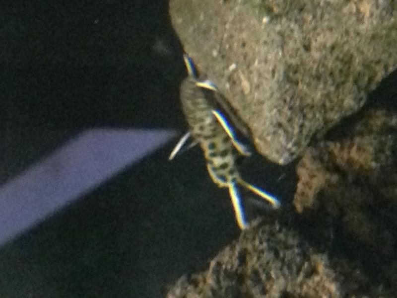Identification d'un poisson 797600IMG1389