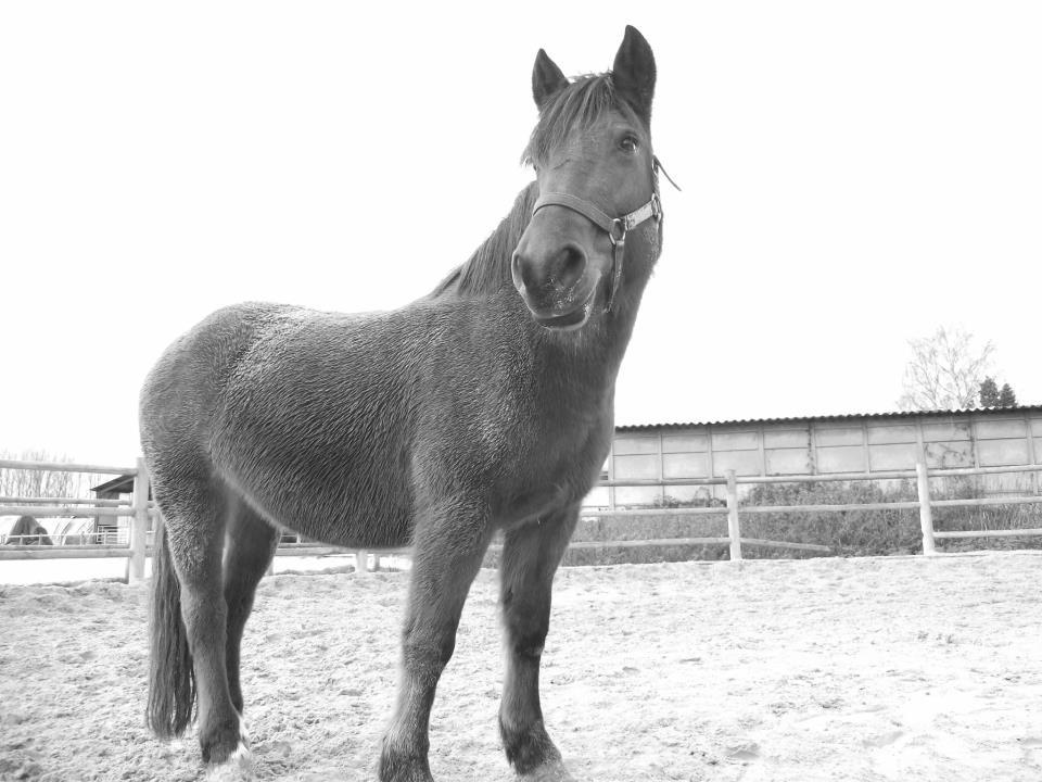 MIRABELLE - ONC Poney née en 2000 - adoptée en juin 2011 par cjean - Page 2 7986463779902491958133402108623563732422135404358437n