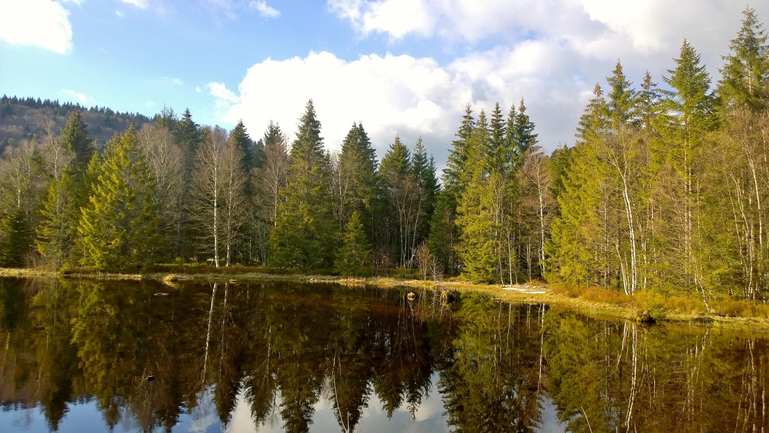Week-end tourbières dans les Vosges 799141WP20150405182757Pro