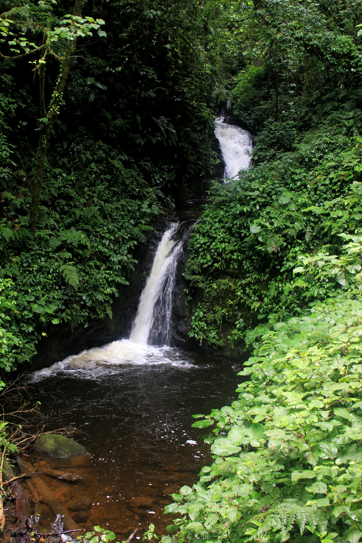 15 jours dans la jungle du Costa Rica - Page 2 800035monte2